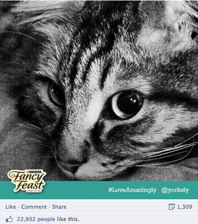 Fancy Feast Facebook Post