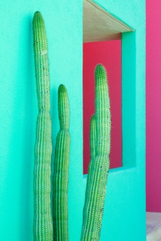 Media Bakery ID: BLD0139607 Cacti Plants Next to a Colorful Wall