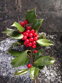 Media Bakery ID: MEM0000681 Close up of holly berries snow