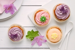 MediaBakery_FCL0071333 Pastel Cupcakes