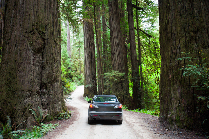 A car driving on Howland Hill Road towards Stout Grove in Jedediah Smith Redwoods State Park.