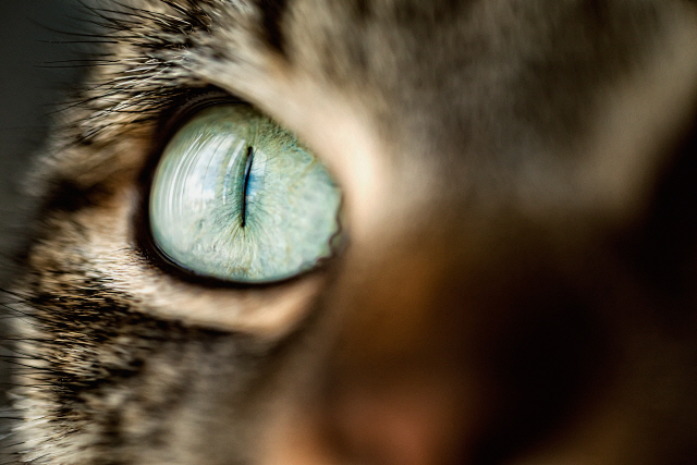 Cat eye, close-up